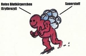 Rotes Blutkörperchen